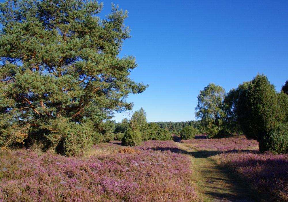 Rehrhofer Heide
