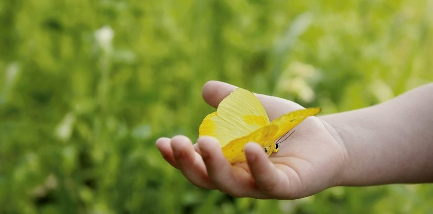 Toddler Child's Hand Holding Orange Barred Sulphur Butterfly Outside in the Woods.