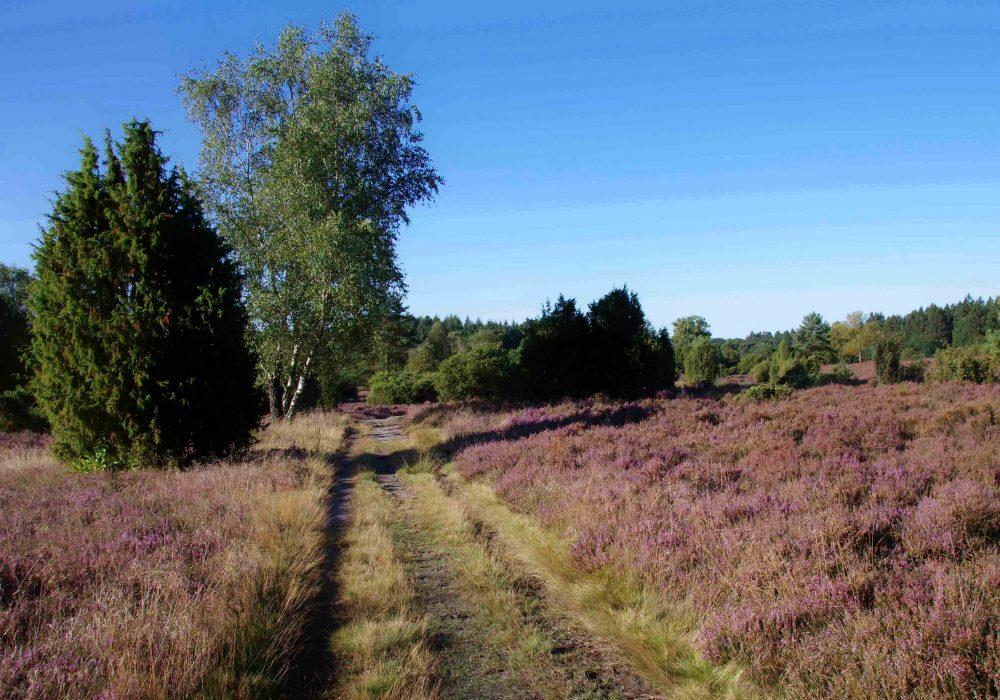 Schwindebecker Heide